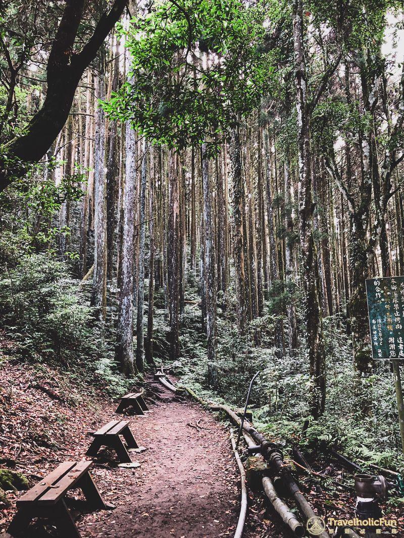 加里山登山步道