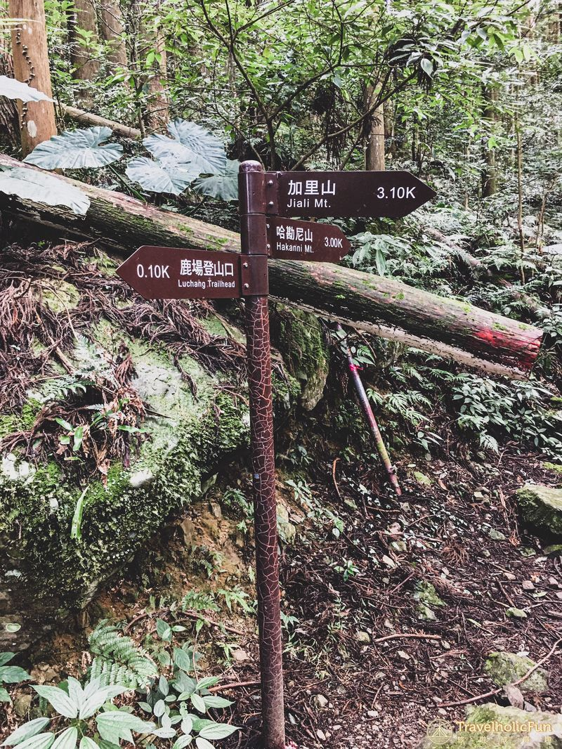加里山登山步道岔路