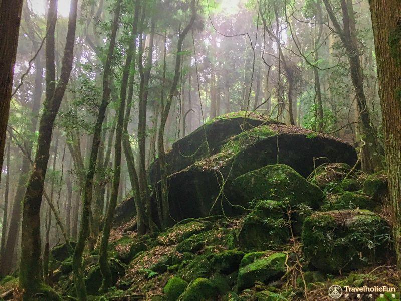 加里山登山步道大石頭